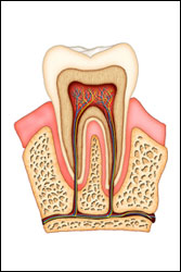 Union Root Canal Treatment